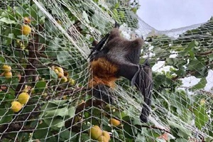 media alert - indiscriminate use of nets killing and maiming wildlife in adelaide suburbs